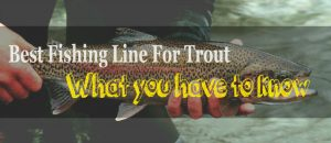 Top-10 Fishing line for trout